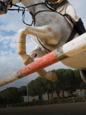 Immagine di un'atleta a cavallo che salta un ostacolo